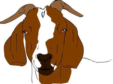 Boer Goat Clipart boer goat clip boer goat drawings http tha baist