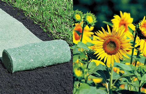 Flower Roll Out Mat by Pre Seeded Roll Out Sunflower Mat The Green