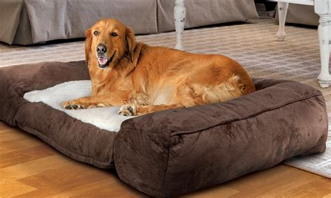 animal planet memory foam pet beds deal of the day groupon