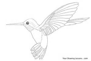 how to draw a hummingbird your drawing lessons