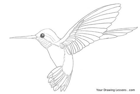 hummingbird and flower drawing www pixshark com images