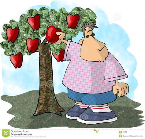 Tree Fruit Picker - apple picker royalty free stock image image 29906