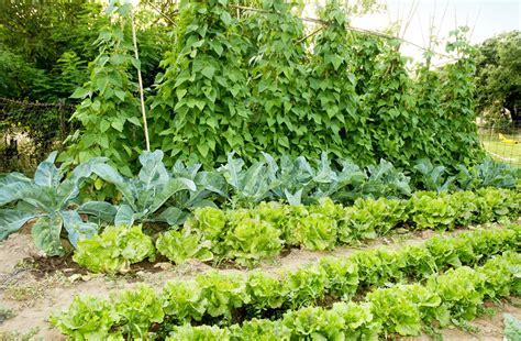 vegetable garden food un huerto a medida para ahorrar en la cesta de la compra