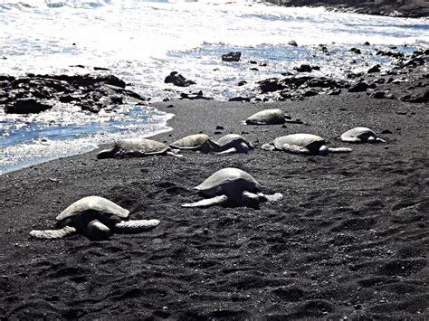 Black Sand Island by Over The Rainbow The Big Island Black Sand Beach X 2
