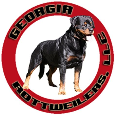 rottweiler breeders in ga rottweilers llc rottweiler puppies in