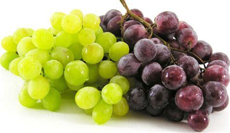 uvas silvestres imagenes uvas eco4u