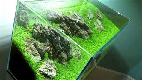 Aquascape Fish Planted Aquarium Hc Ada 60p Youtube