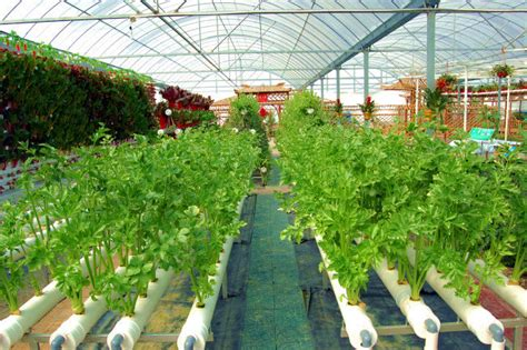 Indoor Vertical Gardening - hydroponic system pvc pipe agriculture hydroponic planting buy hydroponic system pvc pipe
