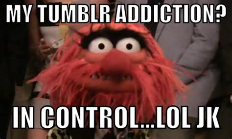 Meme Muppets - animal muppet quotes quotesgram