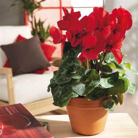Quelle Plante Pour Une Chambre by Je Mets Quelle Plante Dans Ma Chambre Tendances D 233 Co