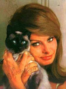 chats de stars  de   de celebrites avec leur chat