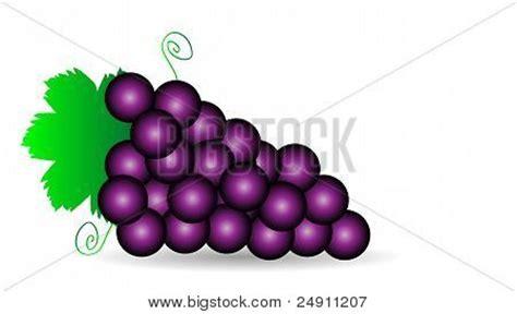 imagenes uvas moradas vector y foto uvas moradas bigstock