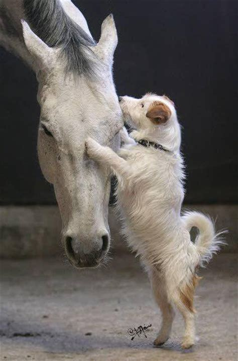 puppies and horses photos showcasing beautiful friendships between horses and dogs