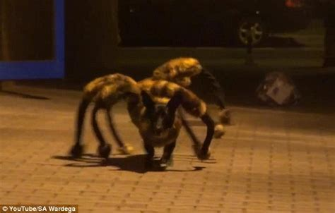dressed as spider dressed as a spider sends running for their lives