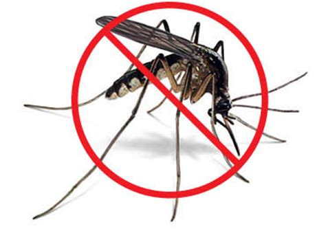 how to control mosquitoes in your backyard how to kill a mosquito nzesylva s corner