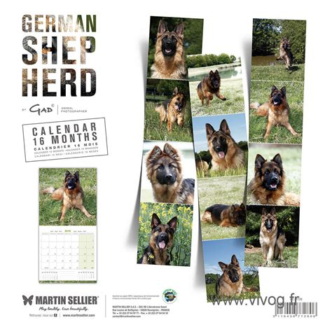 Calendrier Martin Sellier Race Berger Allemand Calendrier Chien 2018 Martin