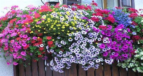 terrazze in fiore cianciana un concorso per i balconi in fiore ripost