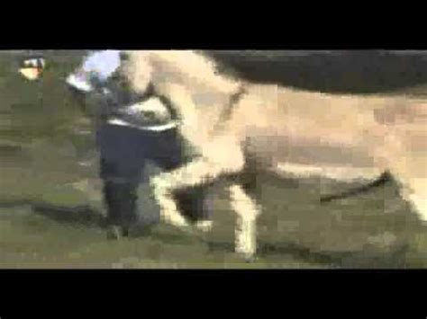 caballos cogiendo youtube burro en celo intentando metersela a un hombre youtube