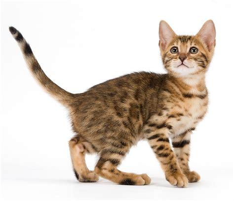 Cha T trouver un nom de chat bien choisir chaton trouver