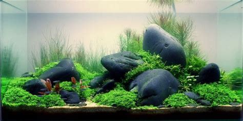 aquascaping guide how to choose plants for aquascapes beginners guide