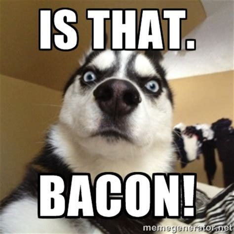 Husky Meme - evil husky meme generator image memes at relatably com