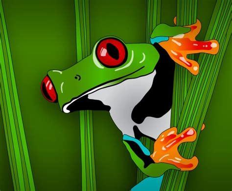 frog  vector    vector  commercial