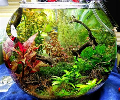 aquascapes online aquascapes online 28 images aquascapes online