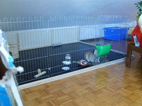 cosa mettere nella gabbia coniglio convivenza