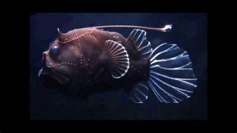 strangely beautiful sea creatures doovi