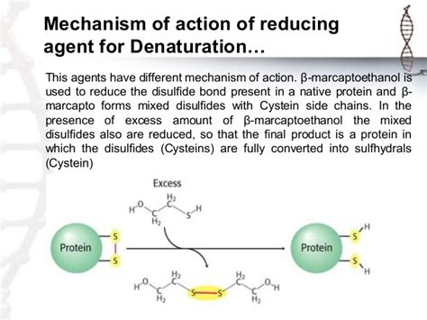 protein agency protein denaturation reducing agents all about ketogenic