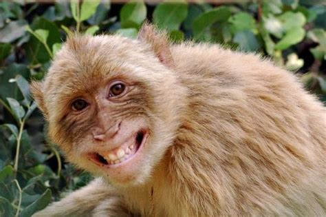 30 happy animals in the world laughing or smiling animal