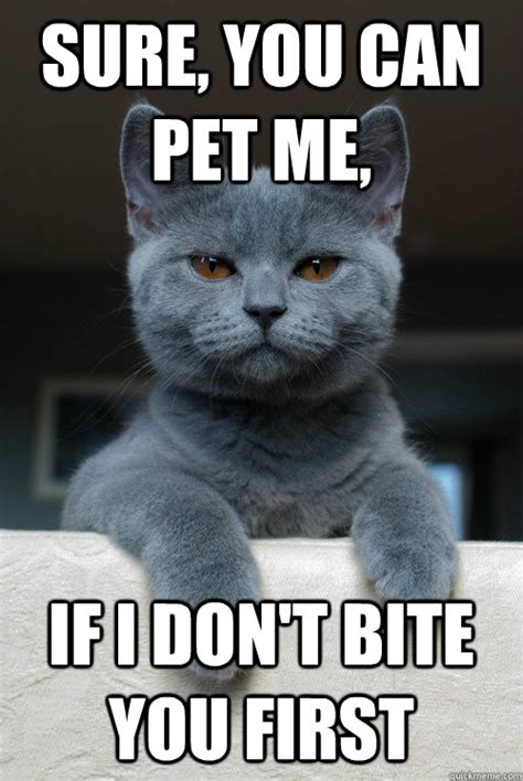 Bite Me Meme - sure you can pet me if i don t bite you first