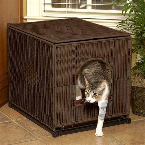 how to your to use a litter box 5 reasons your cat s not using the litter box playful