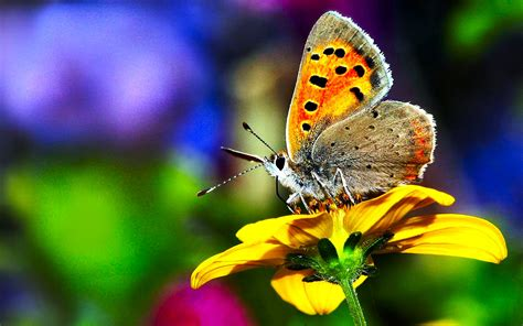 30 colorful butterfly wallpapers free to download butterfly 01 colorsofnature 13march2013wednesday