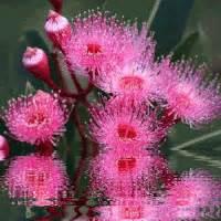 gif animate fiori gratis immagine animata primavera riflesso dei fiori sull acqua