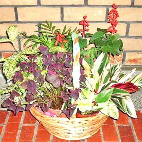 indoor plants singapore singapore indoor plants plant delivery bonsai potted plants