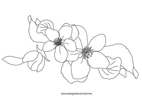 fiori di pesco disegno fiori di melo disegni da colorare