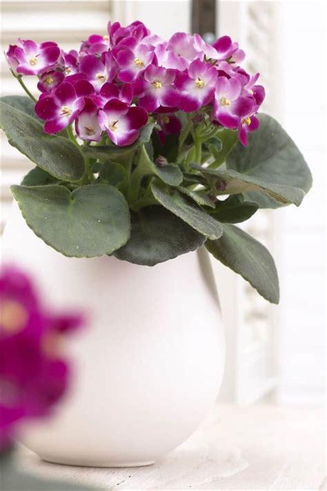 decora con plantas de interior plantas de interior para decorar el hogar decoraci 243 n con