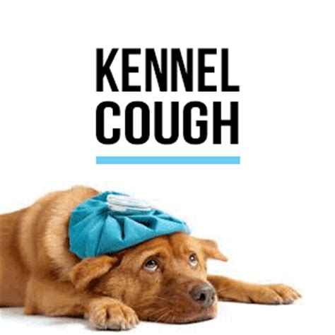 puppy kennel cough what is kennel cough the pawsh