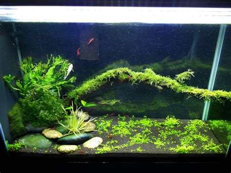 Fluval Spec V Aquascape by My Aquascape Fluval Spec V Page 3 Aquarium