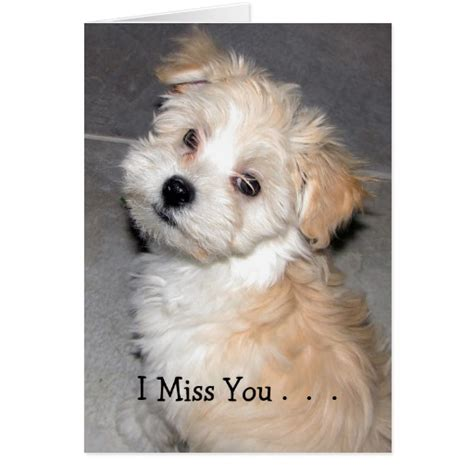 i miss you puppy i miss you havanese puppy cards zazzle