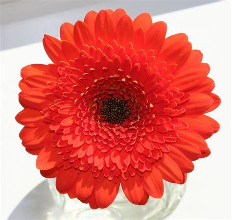 fiori d arancia fiori d arancio photo 1378854 freeimages