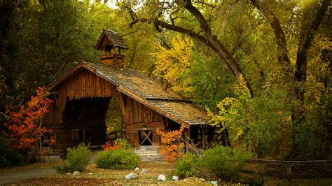 in the house wood house in forest wooden house in the forest wallpapers and images
