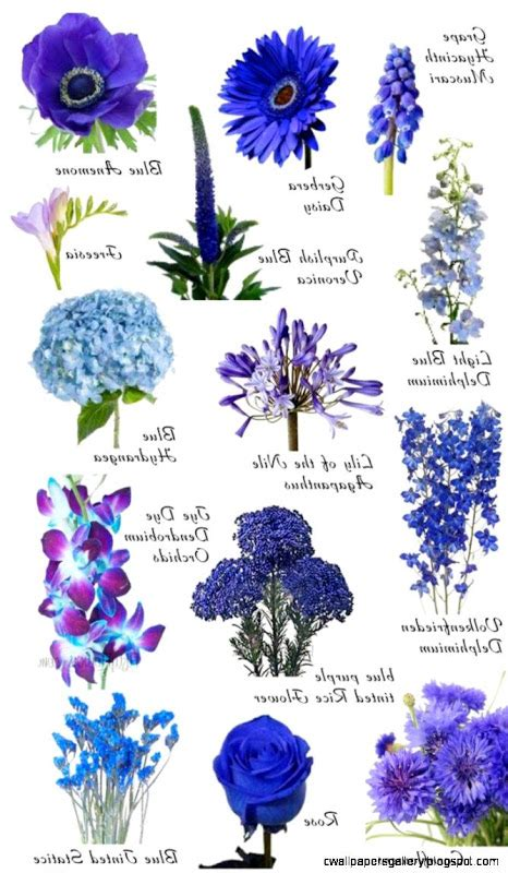 blue flowers names names of flowers and images beautiful best images about gorgeous quality dogs