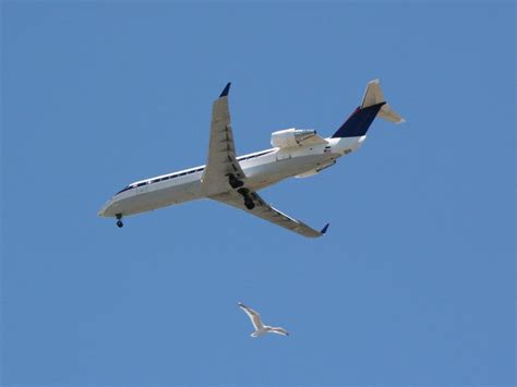 planes fly too fast for birds to dodge smart news
