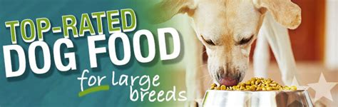 best food for large breeds what is the best food for a large breed