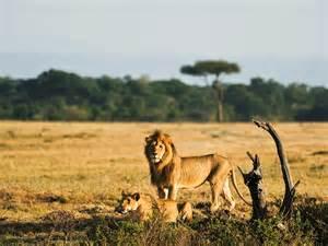 vivez un s 233 jour de plong 233 e exceptionnel en afrique du sud