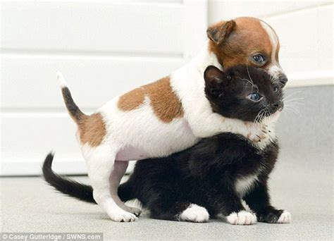 puppy best friends puppy and kitten best friends 003 funcage