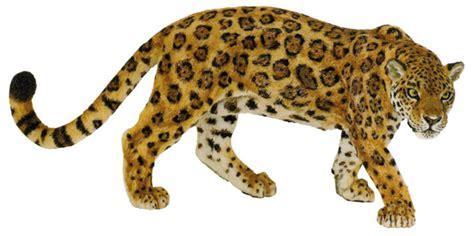imagenes de un jaguar en caricatura el otorongo y la isula relato kukama sobre la resistencia