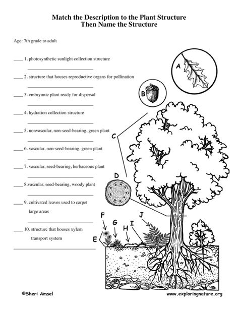 cycle of plants and animals worksheets adaptations of animals worksheets images